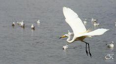 White Crane by imabhi, via Flickr