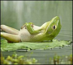 Cute Frogs | And last, but certainly not least . . .