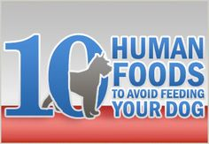 The food humans eat are not necessarily always good for dogs. In fact, food that is safe for humans can instead be toxic or deadly for dogs.  Click here to know Top 10 Human foods to Avoid Feeding Your Dog #PetFood