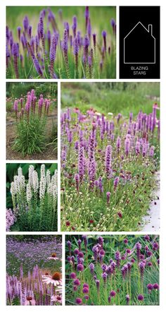 flower feature: blazing stars | THE PLACE HOME