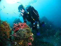 Book your scuba diving course today with Pro Dive in Port Elizabeth, Eastern Cape - Dirty Boots Port Elizabeth, Tsitsikamma National Park, Shark Cage, Scuba Diving Courses, Adventure Center, Shark Diving, Wildlife Safari, Bungee Jumping, Deep Sea Fishing