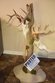 A completed display for either your skull or shoulder mount. Deer Mount Decor, Antler Mount, Deer Decor, Hunting Crafts, Antler Crafts, Antler Art, Taxidermy Display, Taxidermy Decor, European Mount