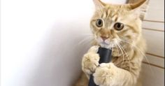 You wouldn't typically expect a cat to be anywhere near a vacuum. This cat, though, had its own ideas.