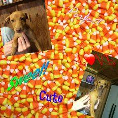 Chesterfield pups #rescuemutt #fureverhome #rescue #whywerescue #adoptdontshop #dog #resuepups #dogsofinstagram #pupsofinstagram #rescueonly #dogs #doglover #mixbreed #ilovedogs #puppy #pup #rescuedog #puppylove #dogsofadirondacksaveastray #shelterdogsrock #mansbestfriend #dogstagram #pet #ilovemydog #adoptme #followme #savealife #petfinders #adoptapet #adoption