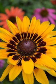 early summer flower photos