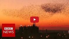 BBC-captures-bird-clouds
