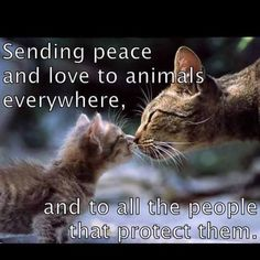 Sending Peace and Love to Animals Everywhere and to All the People that Protect Them!