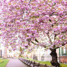 Art Inspo, Magnolia, Clip Art, Street, Garden, Floral, Flowers, Watercolor, Plants