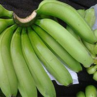 www.geewinexim.com/cavendish-banana.php - Cavendish Banana Suppliers, Exporters & Wholesalers in India. Our other products are Rice, Fresh Vegetables, Indian Spices, Coconut, Coco peat, Cashew Nuts, Chickpeas, Chilly, etc.