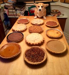 """scampthecorgi: """" Throwback to Scamp being overwhelmed by all this Thanksgiving pie. But it all turned out ok because…pie. """""""