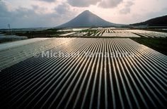 nomen est numen - Rows of tunnels (greenhouses) lining the fields. Tunnel Greenhouse, Rice Paddy, Kagoshima, The Row, Fields, To Go, Universe, Japan, Island