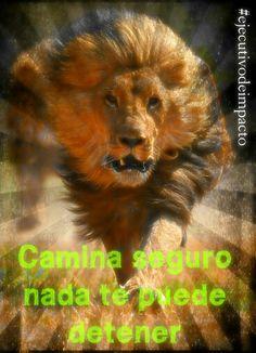 Camina como León, respira como leon, ataca como leon y ruuuge como leon!