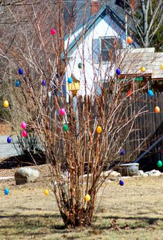 Google Image Result for http://0.tqn.com/d/landscaping/1/0/K/I/Easter_eggs_on_shrub.jpg
