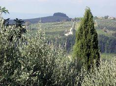Panorama da Vico d'Elsa