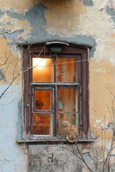 Single candle lights through the window Cat Window, Window View, Window Boxes, Window Ledge, Old Windows, Windows And Doors, Through The Window, Old Doors, Wabi Sabi