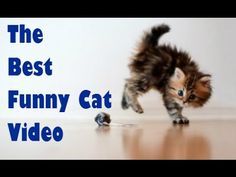 Funny Cats Compilation [Must See] Funny Cat Fail Videos Ever № 23 - Приколы с котами № 23 - http://positivelifemagazine.com/funny-cats-compilation-must-see-funny-cat-fail-videos-ever-%e2%84%96-23-%d0%bf%d1%80%d0%b8%d0%ba%d0%be%d0%bb%d1%8b-%d1%81-%d0%ba%d0%be%d1%82%d0%b0%d0%bc%d0%b8-%e2%84%96-23/ http://img.youtube.com/vi/m87fraZ24aQ/0.jpg  The Best Funny Cats and Fail VIDEOS Watch this funny cat video and you will never leave your cat home alone again :p S