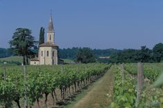 Vineyards at Bordeneuve where the vines are dedicated to Armagnac