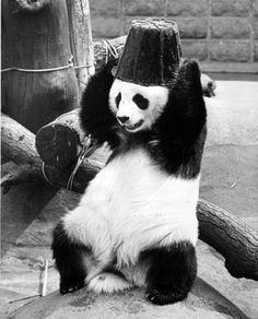 b & w panda #7