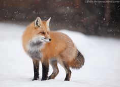 """""""Snowy day """" by Fabs Forns, via 500px."""