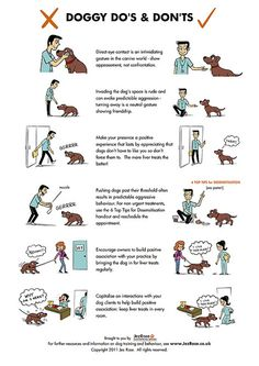 this is good to know for first time puppy owners!