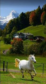 48 Ideas country landscape photography farms beautiful for 2019 Pretty Horses, Horse Love, Beautiful Horses, Animals Beautiful, Beautiful Places, Beautiful Pictures, Beautiful Beautiful, Beautiful Scenery, Landscape Photography