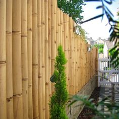 The best Guadua bamboo poles in a wide variety of sizes and diameters for immediate shipping from our warehouse in Europe. Bamboo Poles, Bamboo Fence, Giant Bamboo, Cat Fence, Bamboo Structure, Ghost In The Shell, Retro Futurism, Neon Lighting, Garden Inspiration