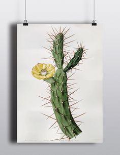Antique Cactus Illustration Large Print Poster Cacti Desert Plants Botanical Art Print Home Decor Wall Art Wall Decor Botany Plants Flower door TheBlackVinyl op Etsy https://www.etsy.com/nl/listing/190256815/antique-cactus-illustration-large-print