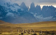 Paine & Fitz Roy Trek - Lonely Planet