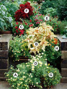 Create a Soft Look B coleus Collen Container Plants, Container Gardening, Container Flowers, Flower Gardening, Outdoor Plants, Outdoor Gardens, My Flower, Flower Pots, Million Bells