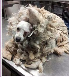 Owner surrenders unrecognizable dog to be killed. I am still amazed how utterly stupid pet owners are/can be. This poor baby! I hope he finds a wonderful new home.