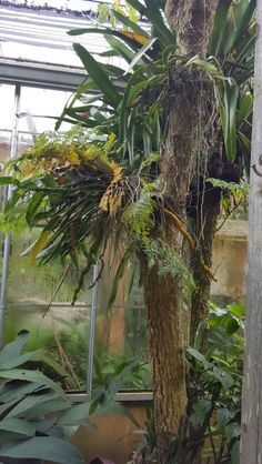 Ferns and orchids mounted on tree