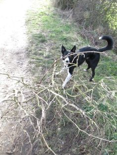 Alfie dragging stick - Photographed by Annie Gibson