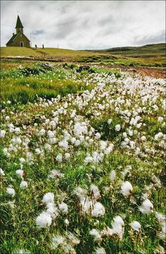 Church & cottongrass, Iceland Iceland, Vineyard, Cottages, Outdoor, Ice Land, Outdoors, Cabins, Country Homes, Vine Yard