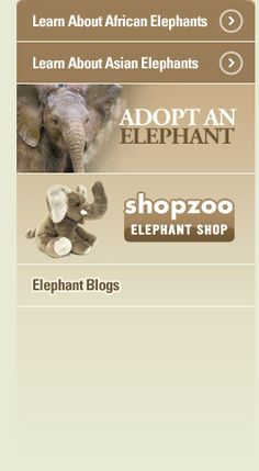 Live feed from the Elephant Cam at the San Diego Zoo. Site also has links to other live webcams in the panda, polar, and ape exhibits.