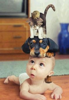 Cute baby with cute pets