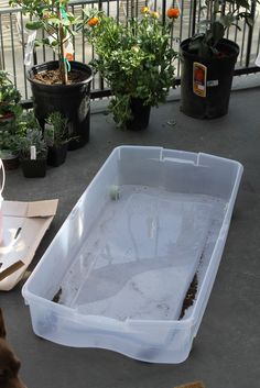 Kate's Short and Sweets: Growing Spinach and Lettuce in an Upcycled Storage Container
