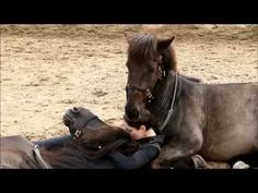 This Woman Has An Amazing Relationship With Her Two Horses. - Equine for Life | Equine for Life