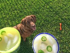 Cheers to our new doggie Lucca! Spicy Margarita Recipe, Margarita Recipes, Lucca, The Rock, Cheers, House Styles, Dogs, Pet Dogs, Doggies