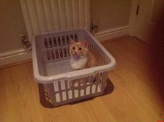 Nearly Behind Bars - http://cutecatshq.com/cats/nearly-behind-bars/