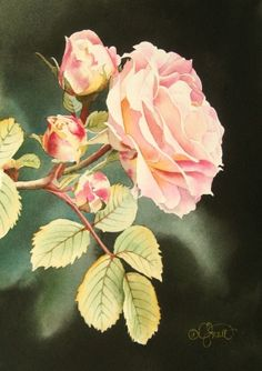 Soft Pink Rose, painting by artist Jacqueline Gnott