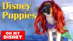 We're Thankful for These Puppies Dressed as Disney Characters | Oh My Disney