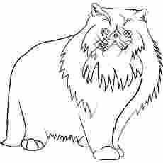 Cat Color Pages Printable Cats Coloring Pages Persian Cats