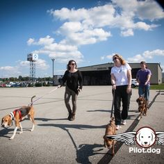 After a big trip from Fayetteville NC to Latrobe PA our precious rescue dog passengers enjoyed a brisk walk and time with volunteers before they headed off for adoption. http://pilot.dog  #aviation #pilotnpaws #instaaviation #instagramaviation #dog #dogrescue #pilotdog #pet #pilot #instagrampilot #instapilot #instadog #foreverhome #rescuedog #dogs