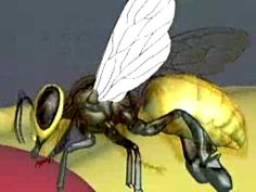 Lesson 4 (Pollination) - animated version of how honey is made inside the bee Science Videos, Science Lessons, Teaching Science, Science For Kids, Science Activities, Life Science, Science Experiments, Teaching Ideas, How Bees Make Honey