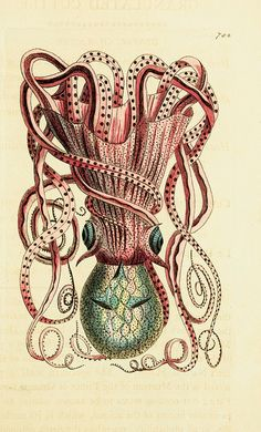The naturalists' miscellany : or Coloured figures of natural objects; drawn and described immediately from nature. | Flickr - Photo Sharing!