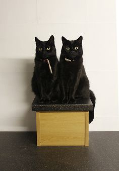 Do you remember that scene in The Shining with the twins? Pretty Cats, Beautiful Cats, Crazy Cat Lady, Crazy Cats, White Cats, Black Cats, Animal Gato, Cat Boarding, I Love Cats