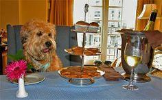 dog friendly hotels southern california