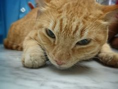 Cat Vaccinations to Prevent Ailments that can affect your Cat