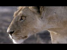 The great migration (BBC) - YouTube