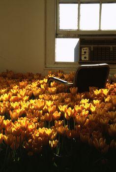 flower interiors / bloom / Massachusetts Mental Health Center / Anna Schuleit